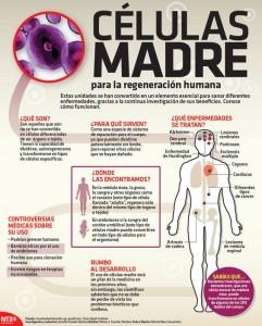 Infografia células madre